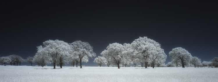 A landscape of bare trees covered in snow and frost
