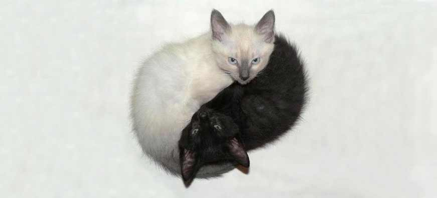 A black and white kitten curled together